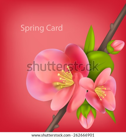 Illustration spring greeting card with branch of Japanese Quince (Chaenomeles japonica) in bloom - vector - stock vector