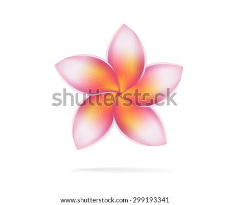 illustration vector of Hawaii flower Frangipani, plumeria rubra on white background - stock vector