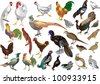 illustration with birds isolated on white background - stock
