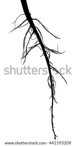 illustration with black root silhouette isolated on white background