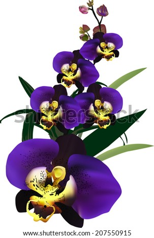 illustration with dark blue orchid flower - stock vector