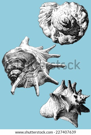 illustration with different realistic shells on a blue background - stock vector