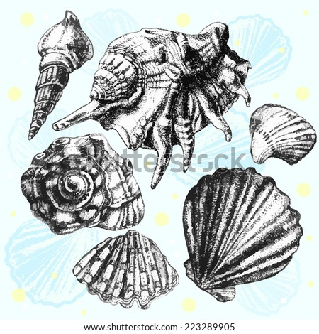 illustration with different realistic shells on a light background - stock vector