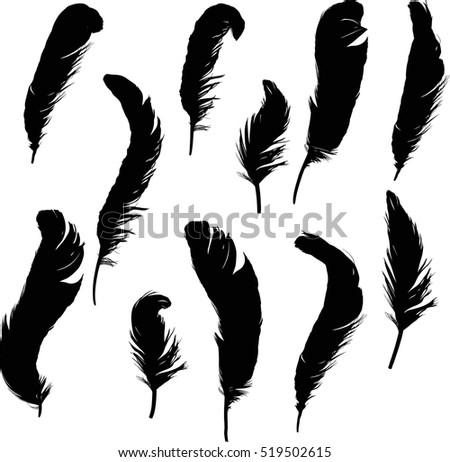 illustration with eleven black feathers on white background