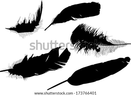 illustration with five black feathers on white background