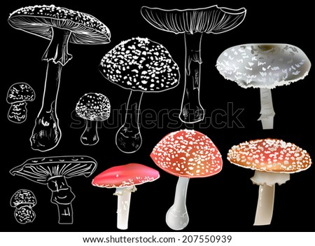illustration with fly agaric mushrooms isolated on black background