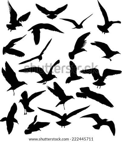 illustration with gull silhouette collection on white