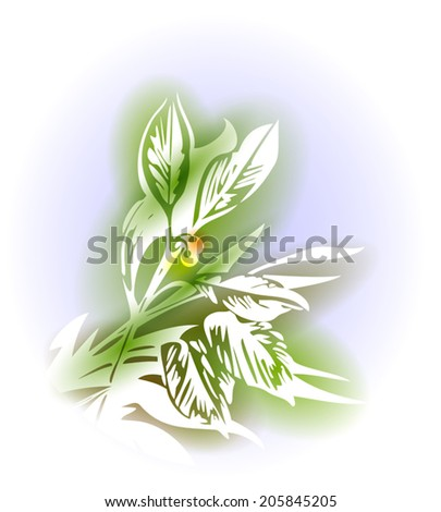 Illustration with hand drawn branch of laurel and soft background like watercolor paintings. Spice herbs series. Abstract sketch with plant silhouettes. Vector file is EPS10, transparency effects.