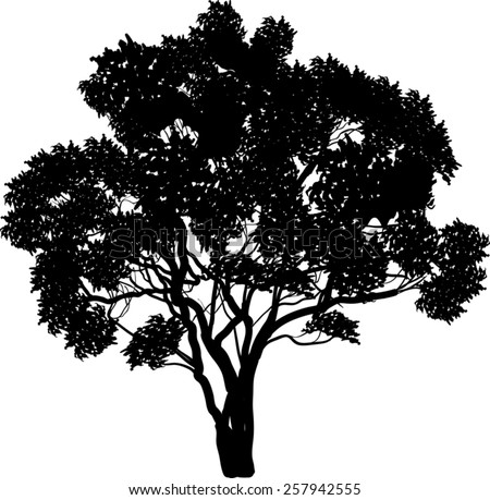 illustration with large tree isolated on white background - stock vector