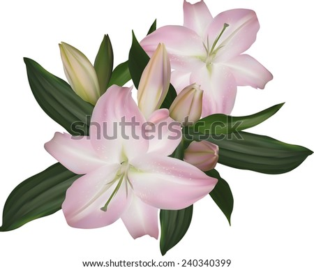 illustration with lily flowers isolated on white background - stock vector