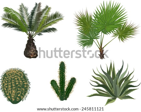 illustration with palm and cactus isolated on white background - stock vector