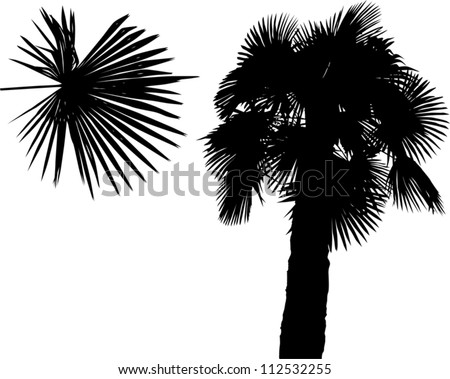 illustration with palm silhouette isolated on white background - stock vector
