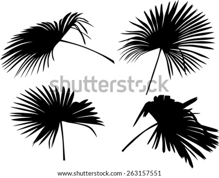 illustration with palm tree leaves isolated on white background - stock vector