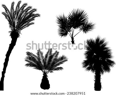 illustration with palm trees silhouettes isolated on white background - stock vector