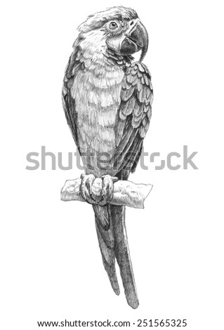 illustration with parrot. hand drawn. - stock vector