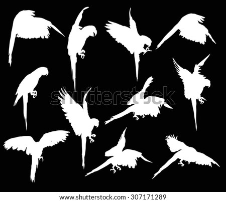 illustration with parrot silhouettes collection isolated on black background