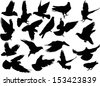 illustration with pigeon silhouettes isolated on white background - stock