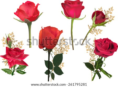 illustration with rose flowers isolated on white background - stock vector