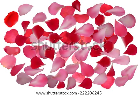 illustration with rose petals isolated on white background - stock vector