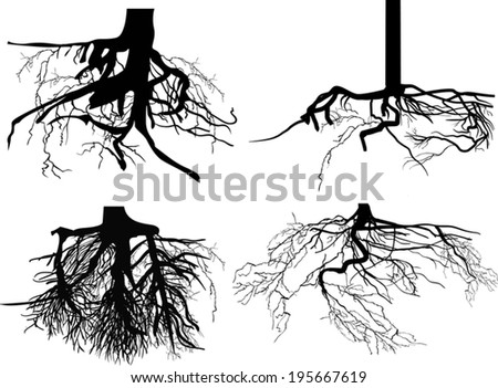 illustration with set of black roots isolated on white background - stock vector