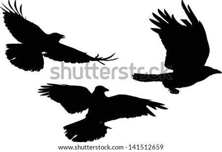 illustration with set of three crow silhouettes isolated on white background