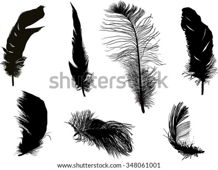 illustration with seven feathers isolated on white background