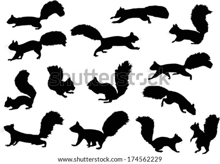 illustration with squirrels isolated on white background - stock vector
