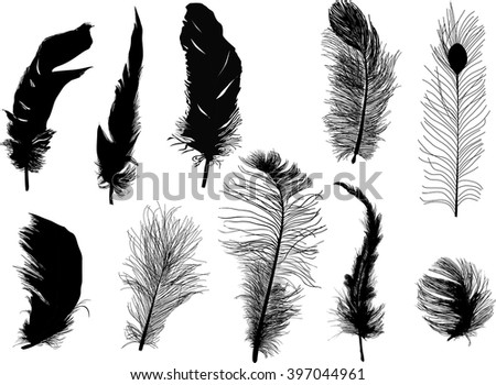 illustration with ten feathers isolated on white background