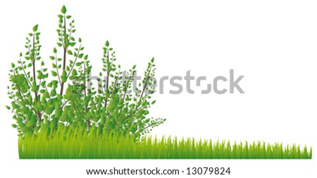 Illustration with the image of a realistic juicy grass and a bush on white