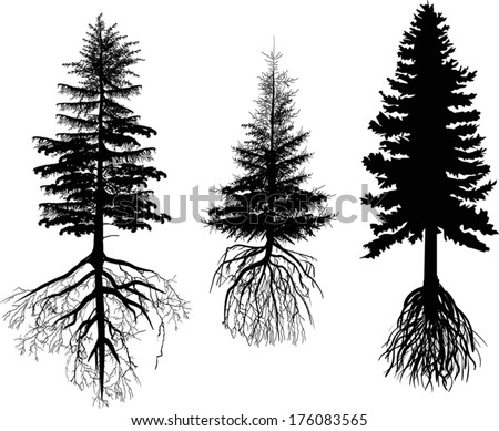 illustration with three firs isolated on white background - stock vector