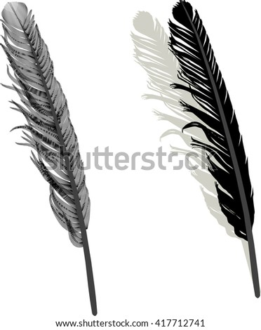 illustration with two feathers isolated on white background