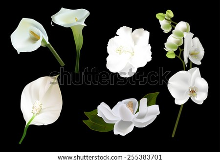 illustration with white blooms isolated on black background - stock vector