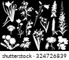 illustration with wild flowers silhouettes isolated on black background - stock vector