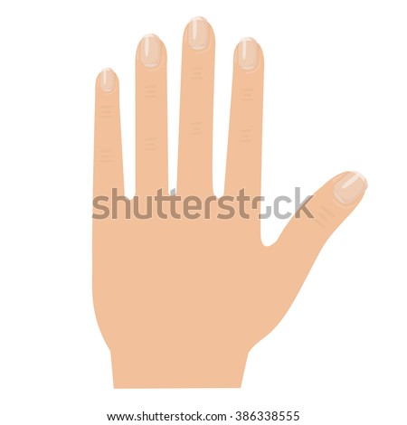Illustrator of hand