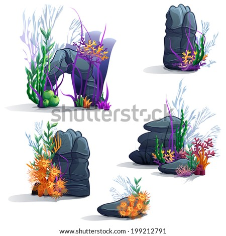 Images of sea stones with algae - stock vector