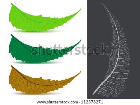 Indian Herbal / Medicinal Leaf - Neem Vector Illustration - stock vector