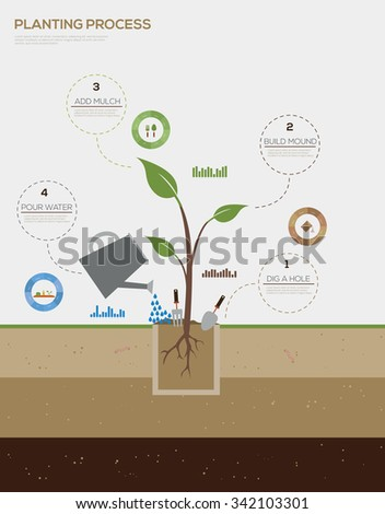 Infographic of planting tree process flat design vector illustration - stock vector