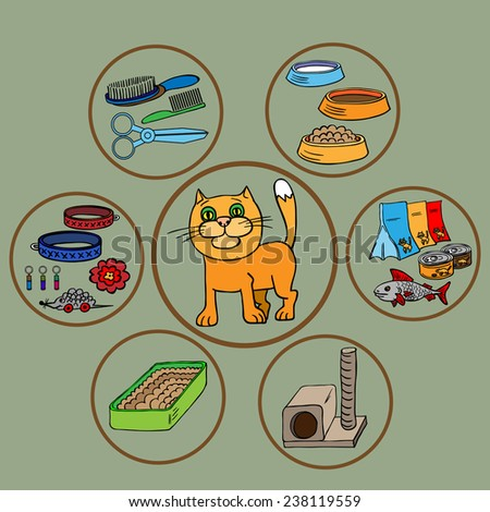 Infographics. Domestic cats and all that is necessary for the maintenance and care. - stock vector