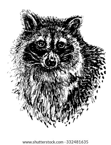 Ink hand drawn raccoon head. Sketchy portrait of cute animal for print and design