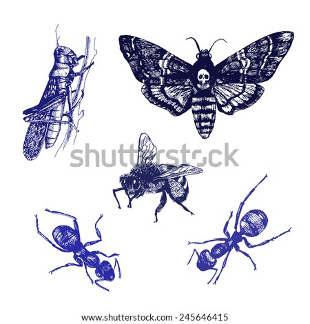 Insect. Hand drawn realistic collection. Vector illustration. - stock vector