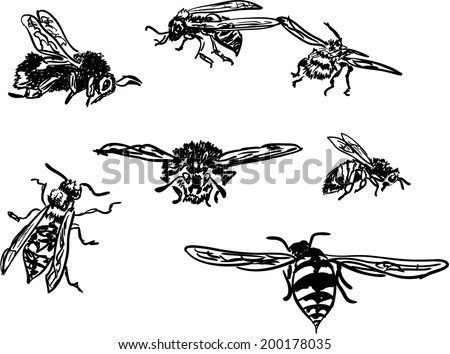 insects - stock vector
