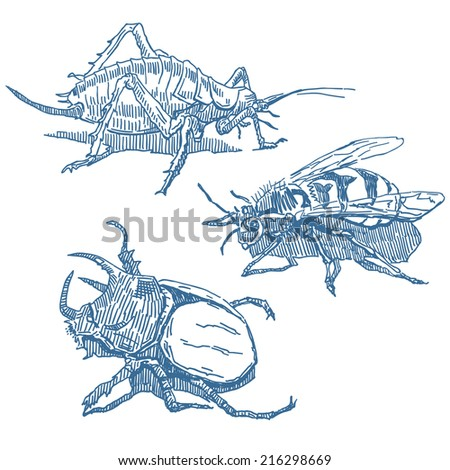 Insects drawings set isolated on white background - stock vector