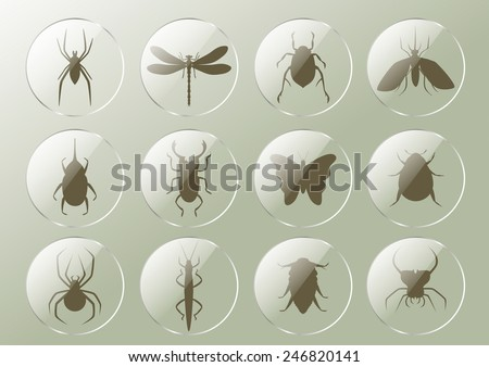 Insects in the glass buttons
