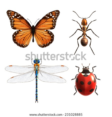 Insects realistic colored decorative icons set with ladybug dragonfly ant butterfly isolated vector illustration - stock vector
