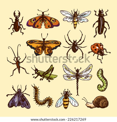 Insects sketch colored decorative icons set with ladybug caterpillar wasp isolated vector illustration
