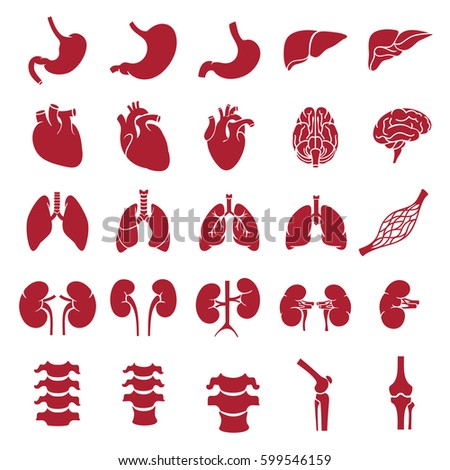 outline the anatomy and physiology of the human body The human body is everything that makes up, well, you the basic parts of the human body are the head, neck, torso, arms and legs our bodies consist of a number of biological systems that carry.