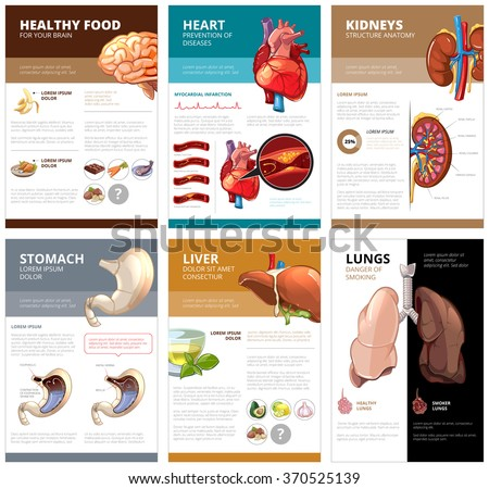 Internal human organs chart diagram infographic. Brain and heart, liver and stomach, lung and kidney, health medical science. Vector illustration brochure template - stock vector