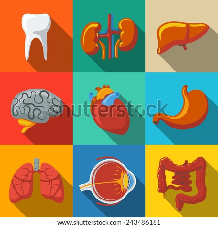 Internal human organs flat long shadow icons set with - heart, brains, lungs, liver, kidneys, intestine, eye, teeth, stomach. Vector - stock vector