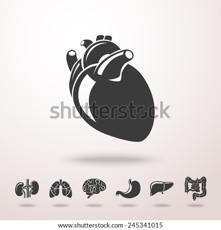 Internal human organs icons set with - heart, brains, lungs, liver, kidneys, intestine, stomach. Vector - stock vector