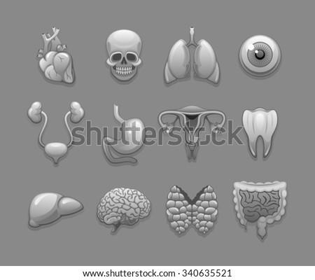 Internal organs  - stock vector